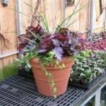 Eco-Friendly Garden Supplies