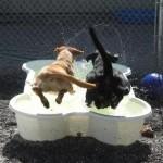 Dog Pool From One Dog One Bone