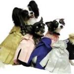 Dog Kimono