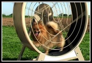 GoPet Canine Exercise Wheel
