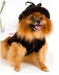 Fashionable Dog Clothing