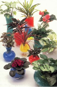 Beautiful Plants With Crystal Soil