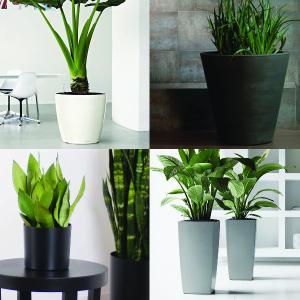 Planter Selection