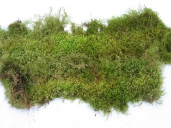 Oregon Green Moss