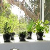 Indoor Floral Vases