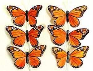 Wonderful Butterflies