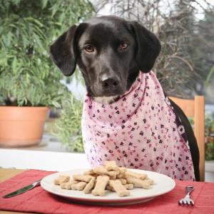 Garlic Cheddar Dog Treats