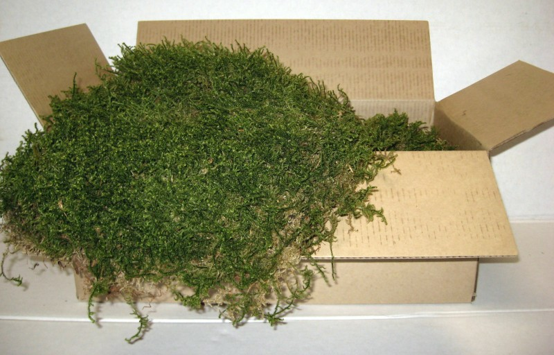 Oregon Coast Evergreen Moss